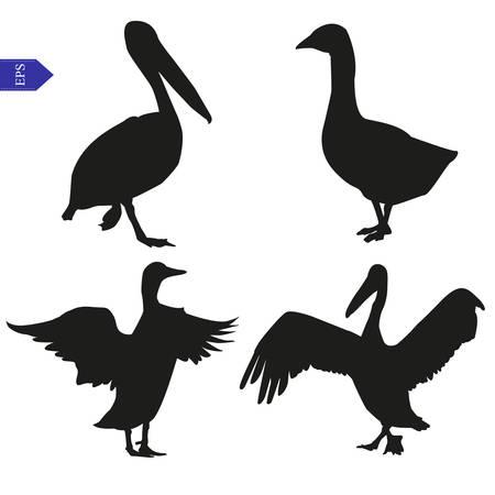 Set van vector silhouetten van pelikaan, gans en eend