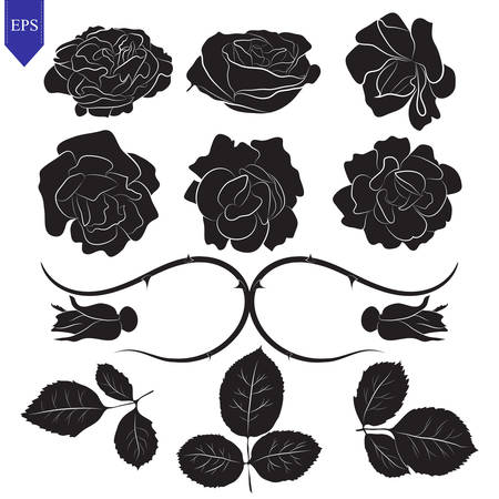 Set of different flower and leaves of roses vector, isolated