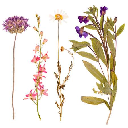 Set van wilde bloemen droog geperst, geïsoleerde Stockfoto