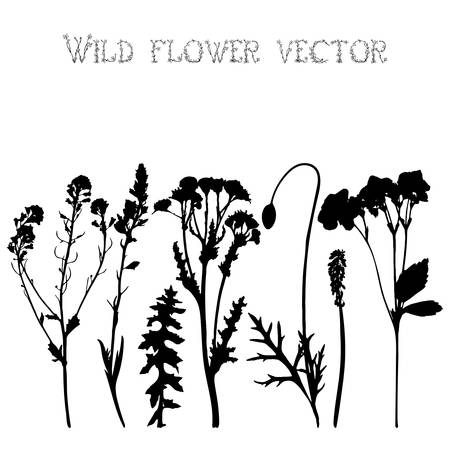 Set black silhouettes of wild flowers and leaves vector illustration Vector