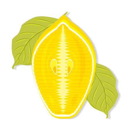 Half a lemon with leaves, cut along the side view vector Illustration