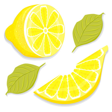 Hand-drawing juicy slice and half of lemon vector