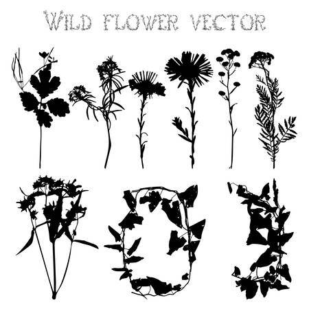 pressed: Set of silhouettes of wild flowers and leaves on a white background vector Illustration