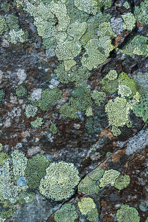 Lichen green tones in stone abstract background