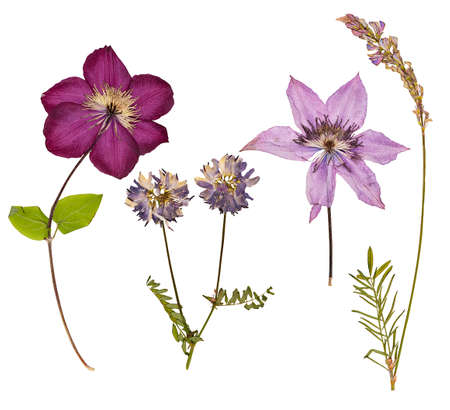 Set of wild dry pressed flowers and leaves, isolated Imagens
