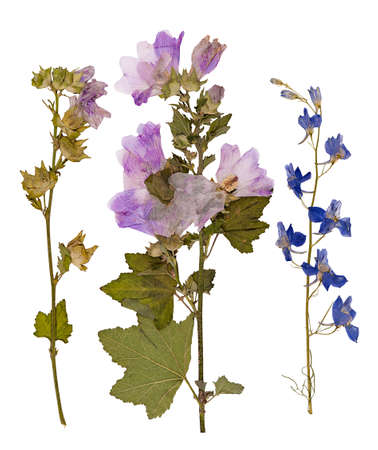 Set of wild dry pressed flowers and leaves, isolated Reklamní fotografie