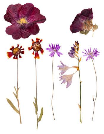 hojas secas: Conjunto de prensado en seco flores y hojas silvestres, aislado Foto de archivo