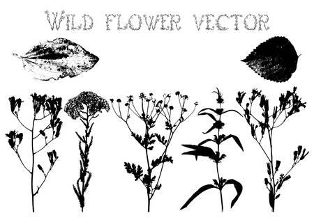 野生の花と白い背景ベクトルに葉のシルエットのセット