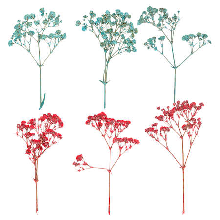Set of wild dry flat pressed flowers, isolated Stock Photo