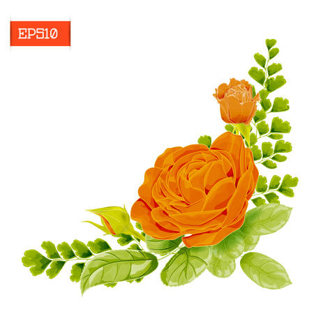 Corner composition. Orange rose flowers with leaves, buds and fern. Vector illustration. Beautiful floral frame. Isolated