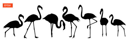 Set of silhouettes of bird flamingo in various poses vector illustration isolated on white