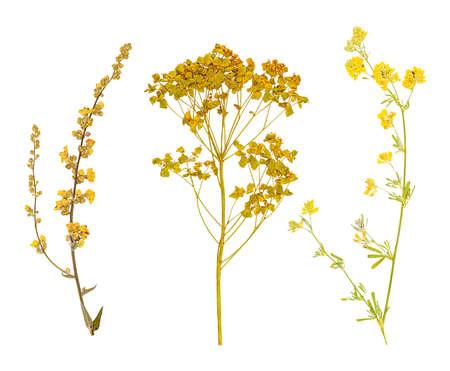 Conjunto de herbario salvaje prensado en seco flores y hojas, aislado Foto de archivo