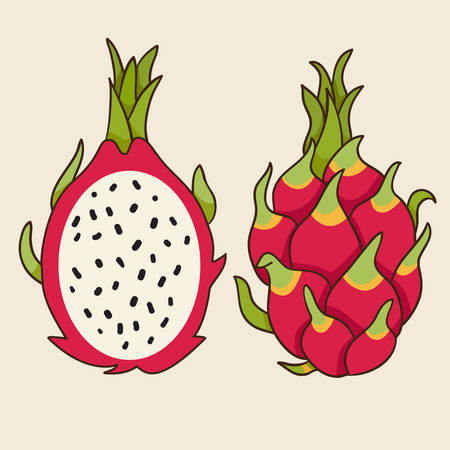 fruit drink: Dragon fruit, vector Illustration. Exotic fruit. Hand-drawn style.