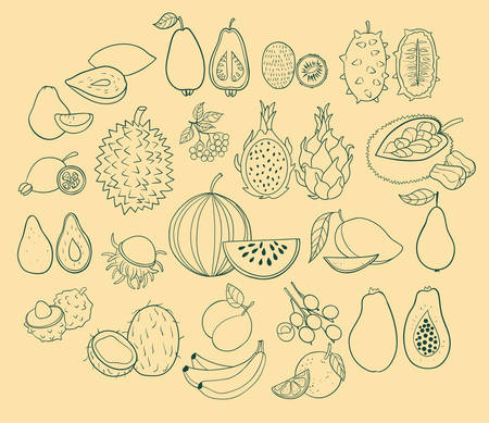 exotic fruits: Vector set of exotic fruits. Vector illustration.