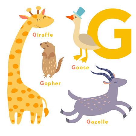 g giraffe: G letter animals set. English alphabet. Vector illustration, isolated on white background Illustration