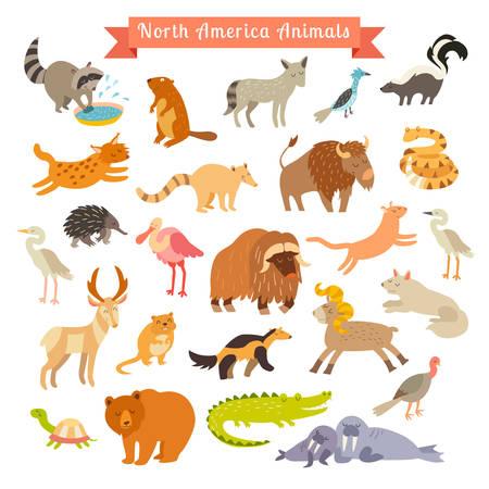 lince rojo: Ilustración de vector de animales de América del Norte. Conjunto de gran vector. Aislados en fondo blanco. Preescolar, bebé, continentes, viajar, dibujado