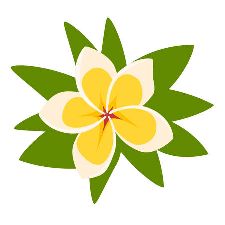 Plumeria tropical floral. Frangipani exotic flower vector illustration isolated on white background Stock Illustratie