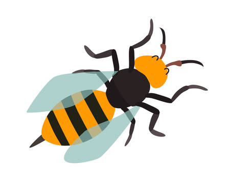 Asian giant hornet icon vector illustration. Cartoon style bee, isolated on a white background