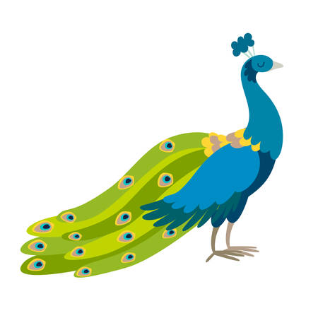 Peacock vector illustration. Standing funny bird. Blue color peacock with green tail drawing in cartoon style. Isolated icon on white background Çizim