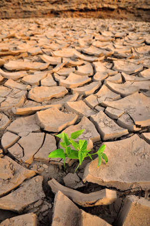 Plant in dried cracked mud 写真素材