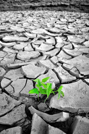 Plant in dried cracked mud photo