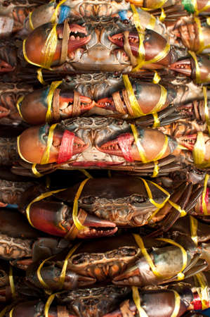 Live Crabs ready to be cooked in a market in Thailand photo