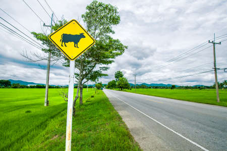 A bright yellow cow sign along a beautiful country road Thailand photo