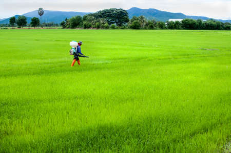 mechanized: farmer spray insecticide in rice field