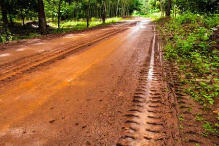 Mud Road trough rubber plantation after rain