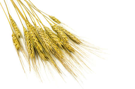 wheat isolated on  white background photo