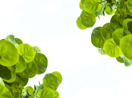 Green circle  leaves on white  background Stock Photo - 16108084