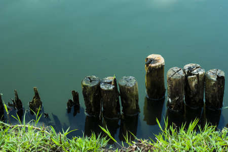 wooden partition: Old wood hedge at pond edge background
