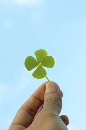 Hand holding a four leaf clover Stock Photo - 16108082