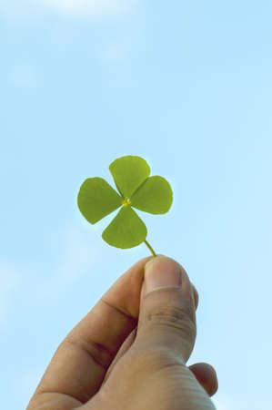 four leaf clover: Hand holding a four leaf clover