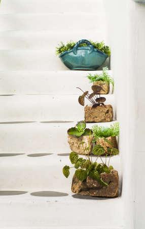 greek pot: Scale di casa greca con decorazione vegetale pentole
