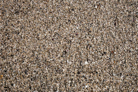 gritty: texture of sand on the beach, crushed shell texture