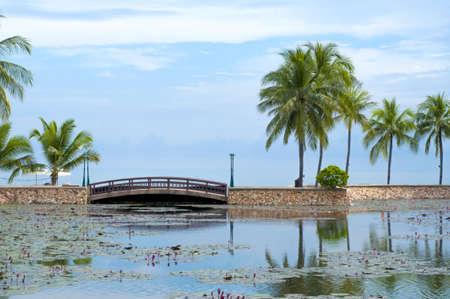 Bridge at tropical garden, lotus pond, coconut tree Stock Photo - 16587258