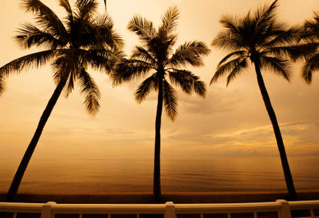 sideway: Palm trees silhouette at sunset