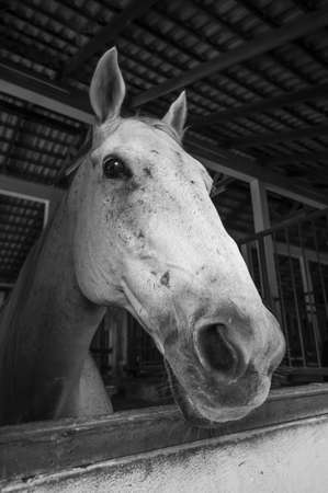 oldened: Horse at stable