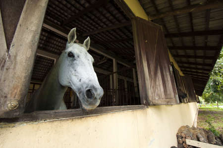 Horse at stable Stock Photo - 16587259
