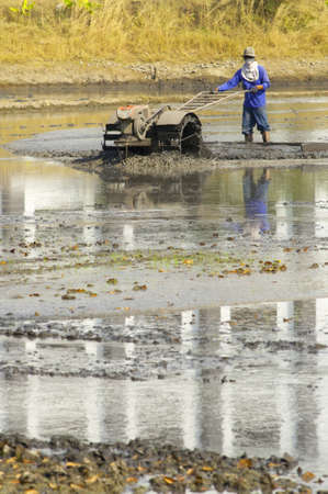 Farmer preparing the ground for the growth of rice in  Thailand photo