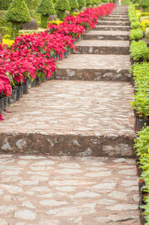 stone stairs landscaping in poinsettia garden Stock Photo