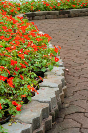 stone walkway in flower garden photo