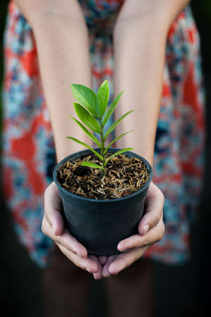 Young woman holding a plant in pot Stock Photo - 17844872