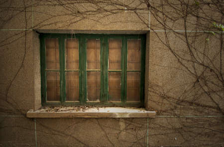 Abandoned old windows with died climber plants photo