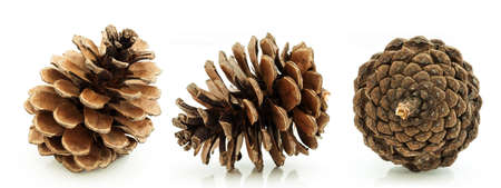 pine three: Brown pine cone three direction isolated on white Stock Photo
