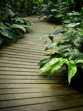 Wood path in tropical garden photo