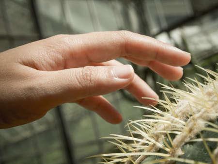 Hand on cactus thorn Stockfoto