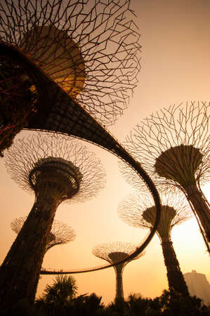 SINGAPORE - MARCH 09  Silhouette of Supertree at Gardens by the Bay on March 09, 2014 in Singapore  Gardens by the Bay was crowned World Building of the Year at the World Architecture Festival 2012