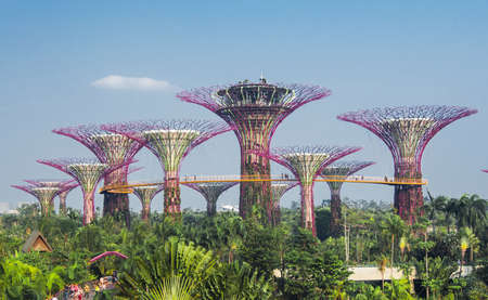 marina bay sand: Supertree grove in garden by the bay - singapore
